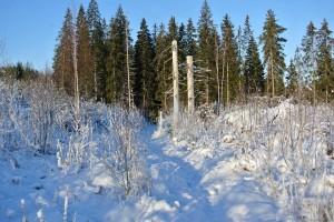 talvipatikointi