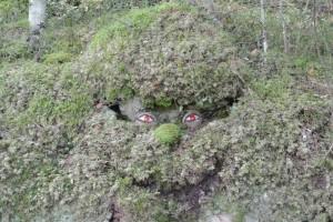 Tuhkakankaan laavun ympäristössä asustelee myös vuorenpeikko